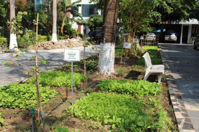 """Mường Thanh Quy Nhơn phát động chiến dịch """"Keep Garden Green"""" - Trồng rau sạch, giữ vườn xanh"""